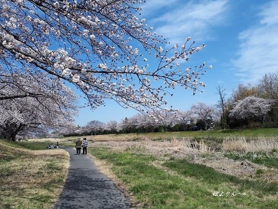 桜散歩.jpg