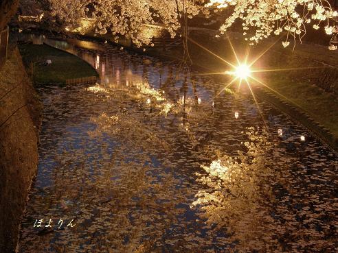 水辺の夜桜.jpg