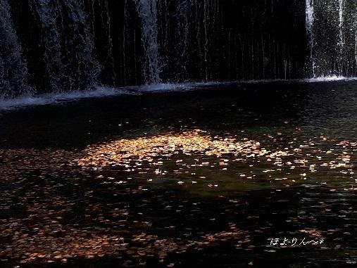 きらめく秋☆.jpg