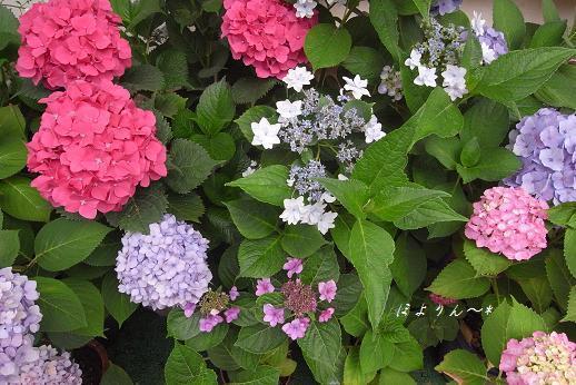 どの花見ても綺麗だなぁ〜♪.jpg