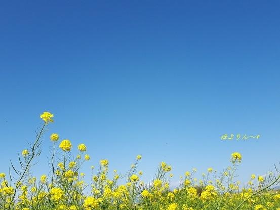 のびのび〜〜〜♪.jpg