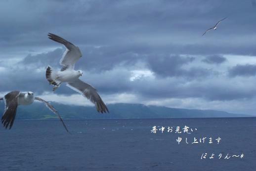 カモメ〜ル♪.jpg