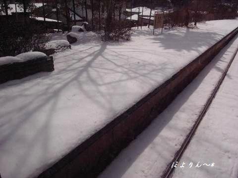 プラットホームの木影.jpg
