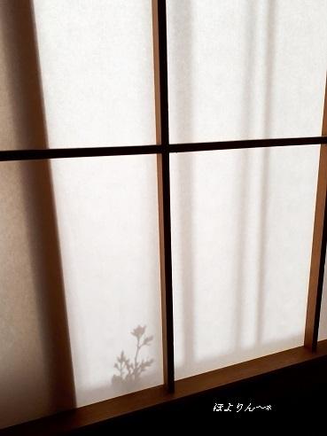 和む日差し☆〜.jpg