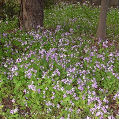 咲く花.jpg