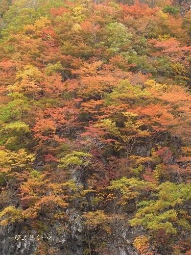 岩肌を彩る紅葉.jpg