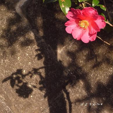 影と共に咲く.jpg