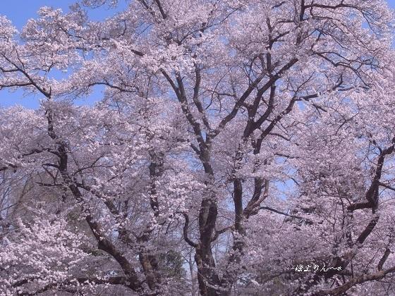 春 再び・・・.jpg
