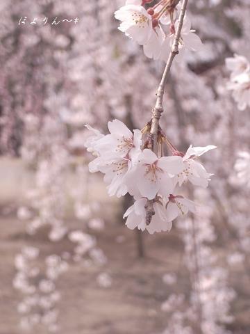 春うらら〜〜〜♪.jpg