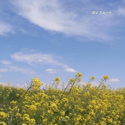 春ですね〜♪.jpg