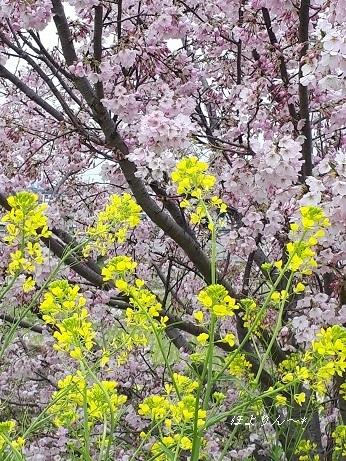 春の色.jpg