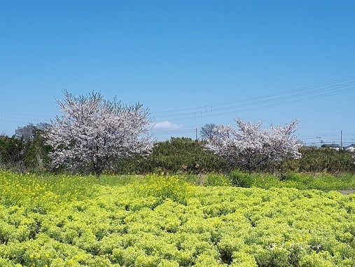 春の色♪.jpg