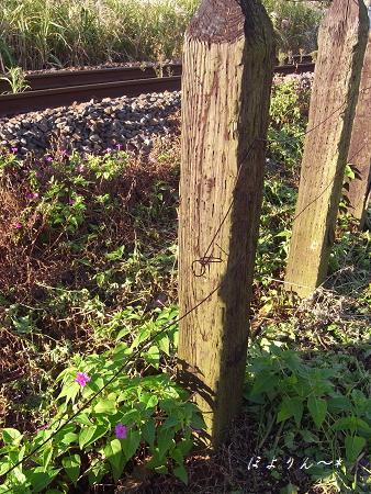 枕木の柵.jpg
