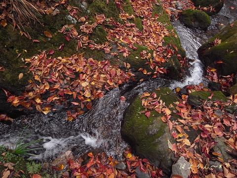 水の音・落ち葉の匂い.jpg