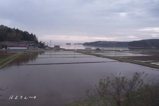 水田のすぐ向こうは海.jpg