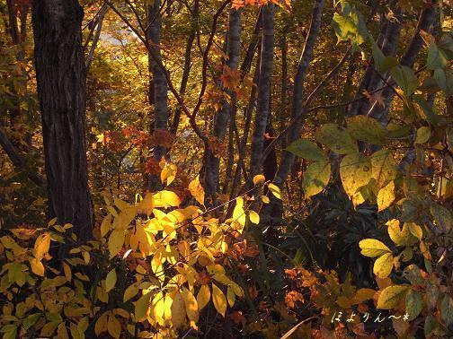 秋の夕日☆.jpg