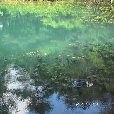 緑の涼〜.jpg