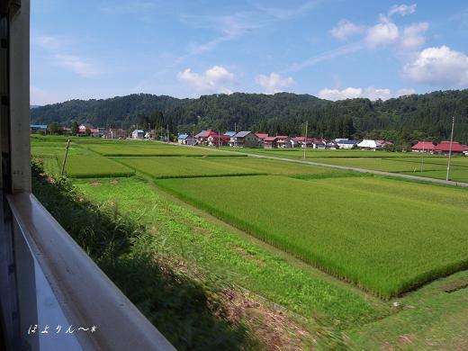 緑の風〜.jpg