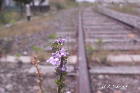 花咲く線路.jpg