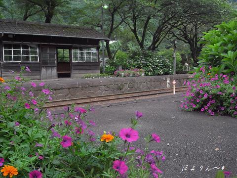 花咲く駅.jpg