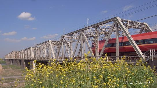 菜の花と赤い電車.jpg