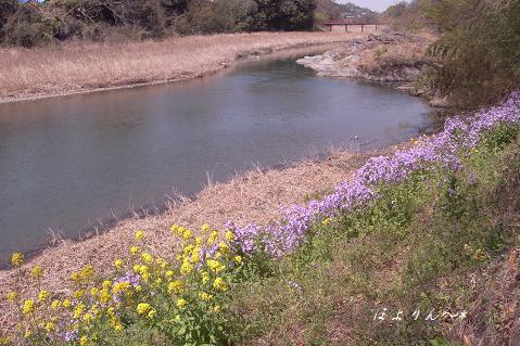 菜の花色と紫色.jpg