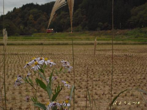 野菊の向こう側から.jpg